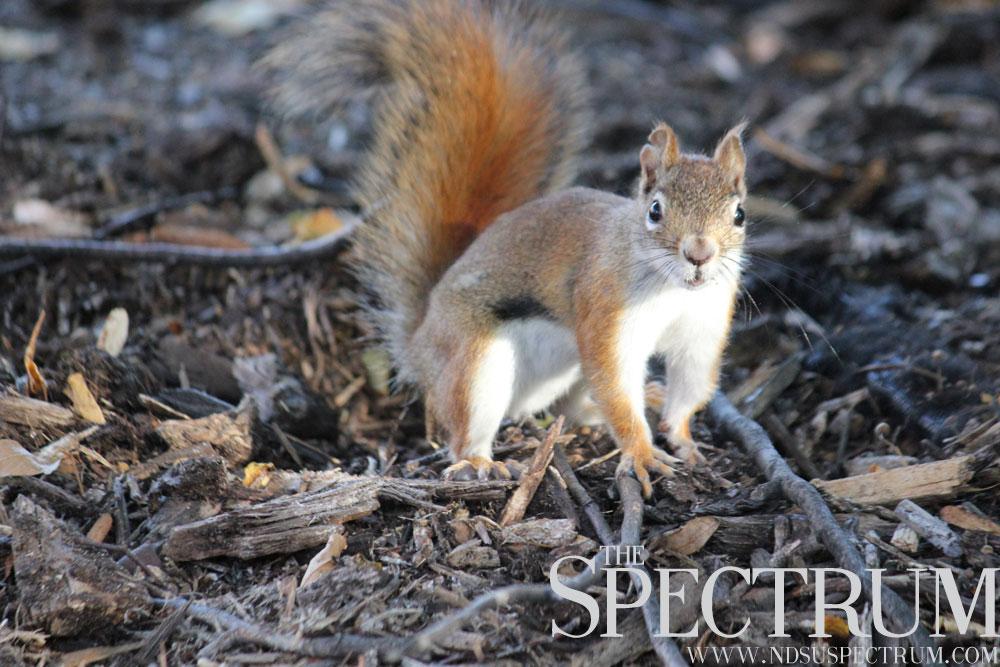 Josh-Francis-Squirrel-PHOTO-2