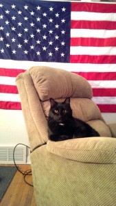 PHOTO COURTESY | JACOB LYNCH Professor X, pictured, poses in front of the American flag. The cat won over 50 votes during the student body elections this spring.
