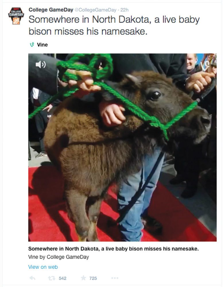 """COLLEGE GAMEDAY   PHOTO COURTESY  A Vine post last week by ESPN's """"College GameDay"""" included a video of Corso, NDSU's live bison mascot."""