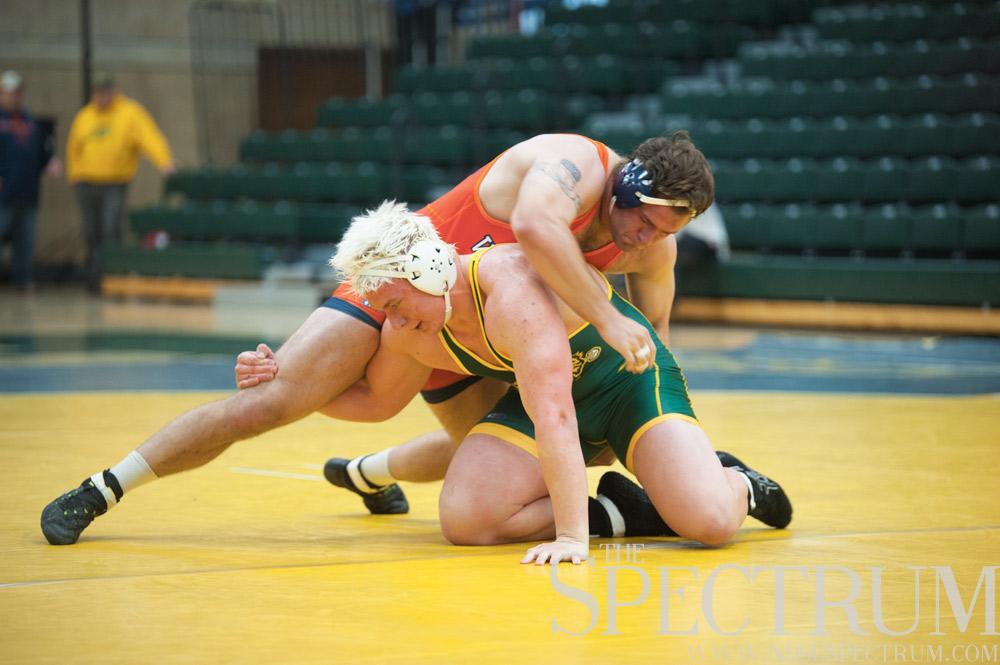 bison wrestling