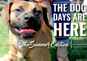 the summer edition